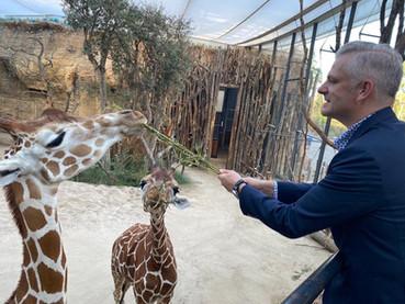 Salzgeber beim Füttern der Giraffen im Zoo Zürich