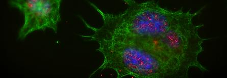 Nanomedicine unab nanomedicina vilos