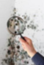 wall mold.jpg