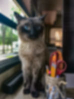 Pets-Duncan.jpg