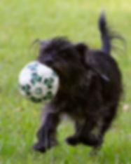 Zuzu-Soccer.jpg