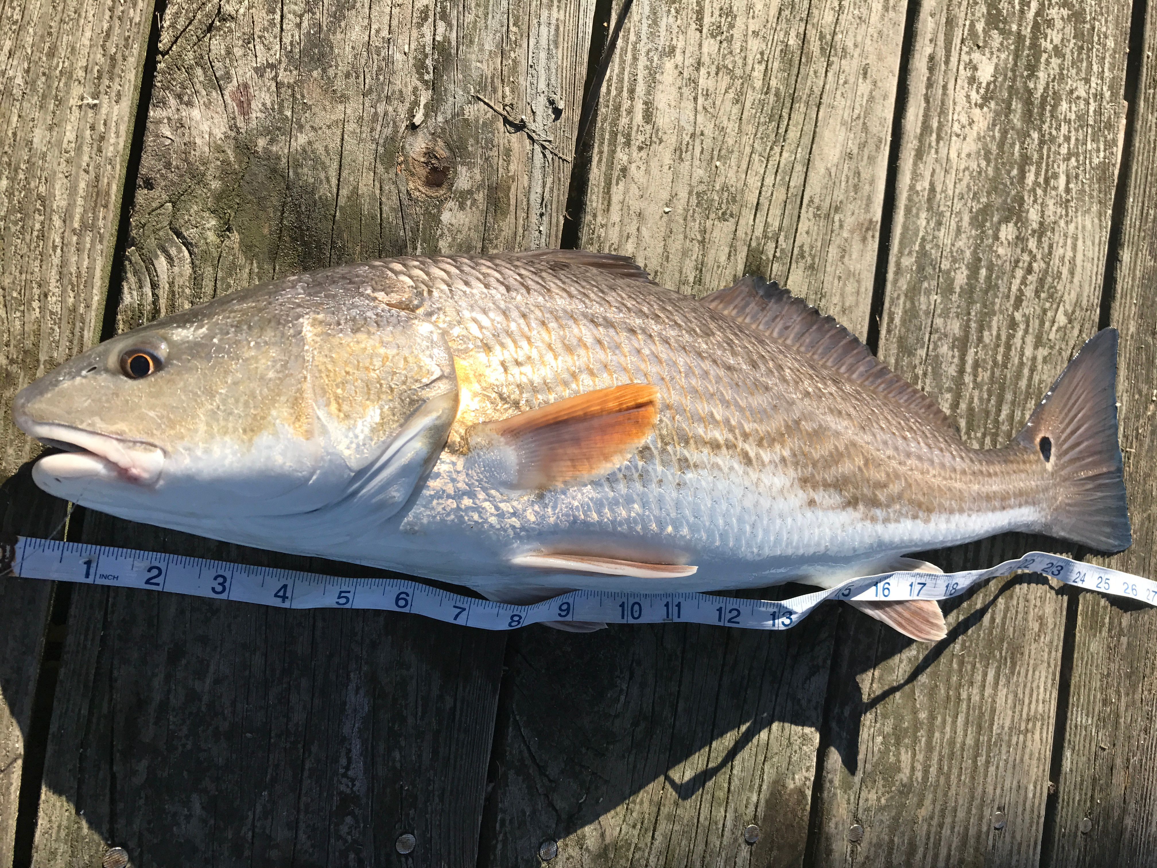 8 hr guided saltwater fishing charter
