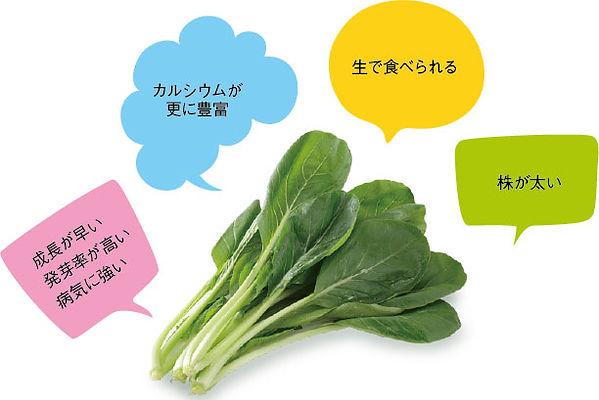 小松菜を改良