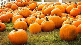 pumpkins_mgn_640x360_71026P00-DTDIG_1536