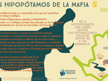 Los Hipopótamos de la mafia