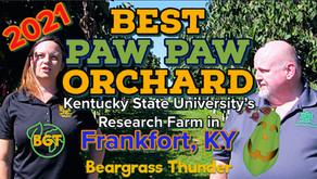 KSU's world-renowned paw paw orchard: Kentucky's native fruit