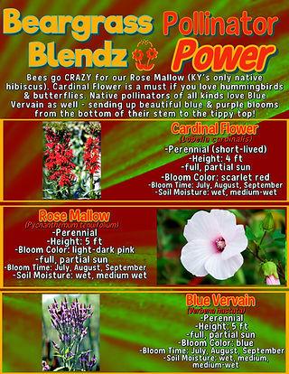 Pollinator Power info sheet.jpg