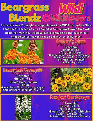 Wild Wildflowers info sheet.jpg