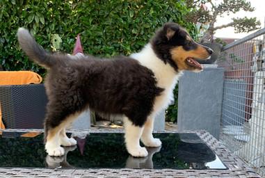 Hector 8 Wochen alt.