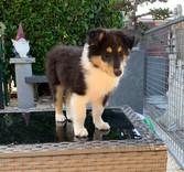 Ginger 8 Wochen alt
