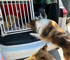 Caramba nimmt Abschied von ihre Ginger.