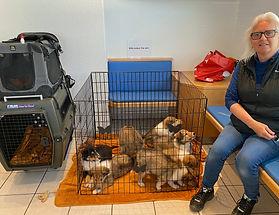 Besuch bei Schule und Tierarzt mit I-Wurf Woche 6 und 7