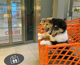 Besuch Einkaufcenter mit I-Wurf Woche 8