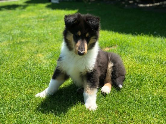 Hector 9 Wochen alt.
