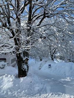 Königslinde im Schnee
