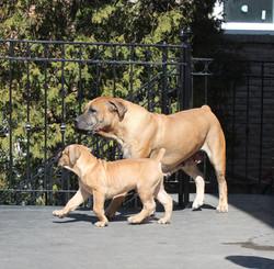Cyra and Rocco