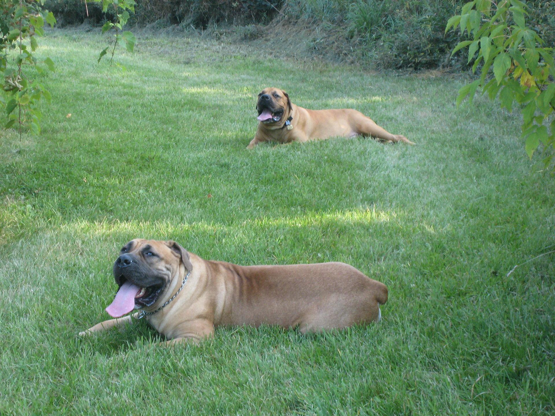 Cyra & Jakaan