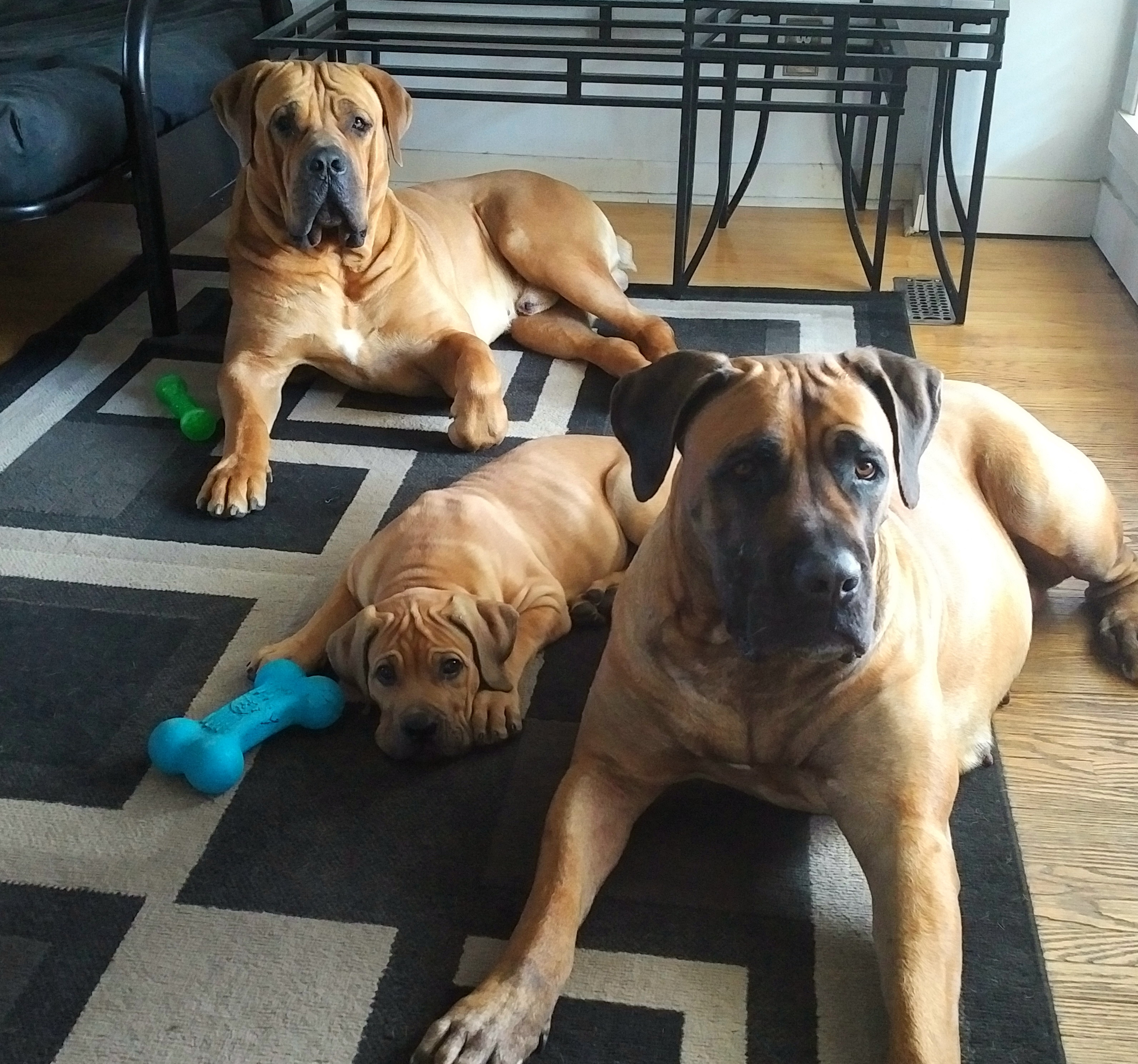 Luca , Rocco & Nyah