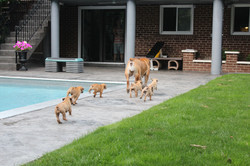 Cyra & pups