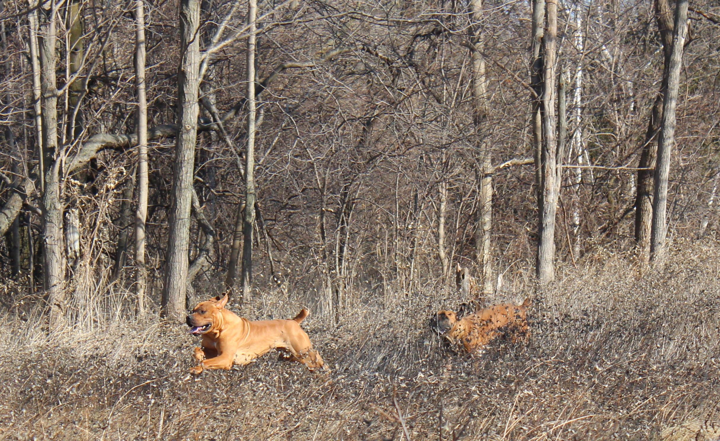 Nyah chasing Luca