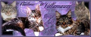 Chatterie de Villamauve maine coon