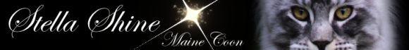 Maine Coon of Stella Shine
