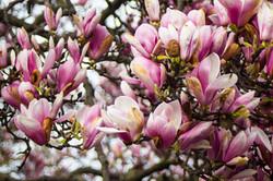 blooms_25632017404_o