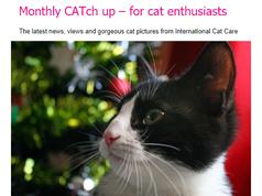 I Cat care Newsletter December 2017.png