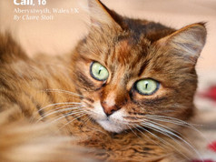 Love Cats 'Most Beautiful Cats' 2021.jpg