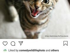 Comedy Pet Photo Awards 2020.jpg
