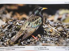 Wildlife Photography World Autumn 2018.JPG