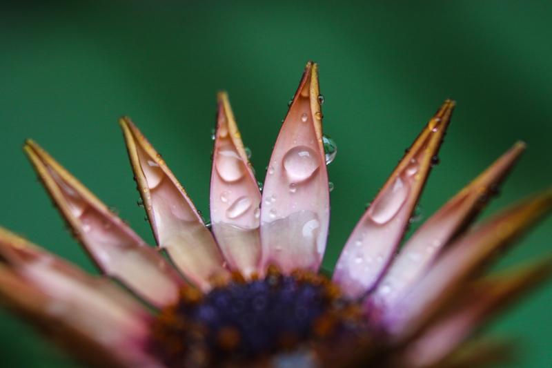 Raindrops (3)