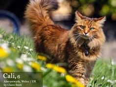 Love Cats Calendar 2019 (2).jpg