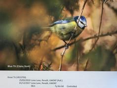 Birds in Wales Report 2018 (1).jpg