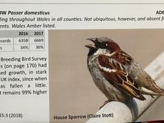 Birds in Wales report 2018 (2).JPG