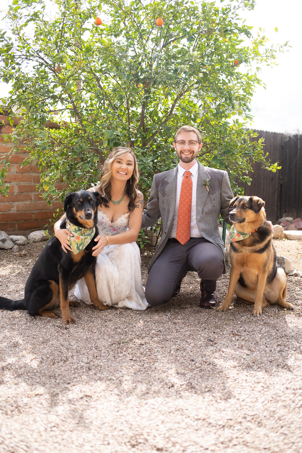 bride and groom smiling with dogs