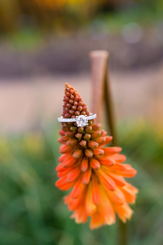Engagement ring on orange plant