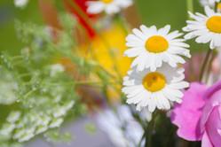 Anna-Flowers-52.jpg