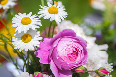 Anna-Flowers-51.jpg