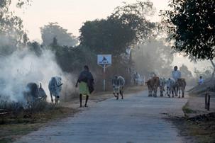 Mocha Village 9.jpg
