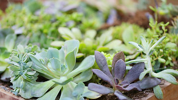 Calming plants in a box