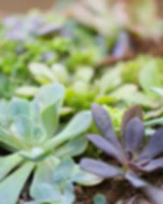 piante benessere corpo mente psicolaboratori
