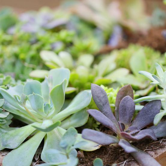 plantas|vegetales|arbustos