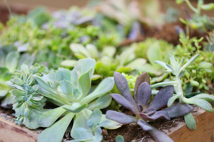 plantas vegetales arbustos