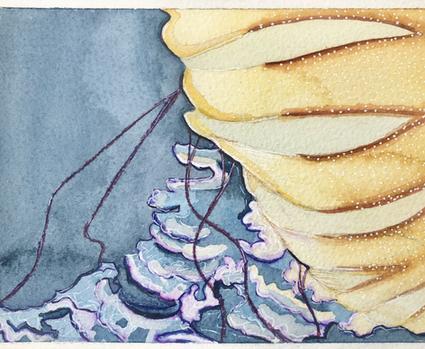 Stung by Jellyfish