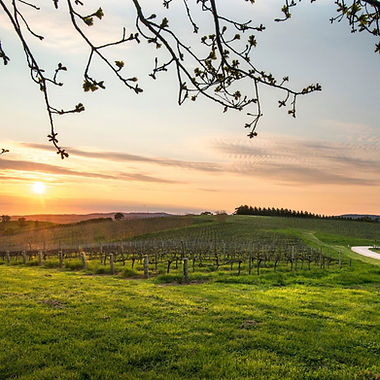 AU Wineries.jpg