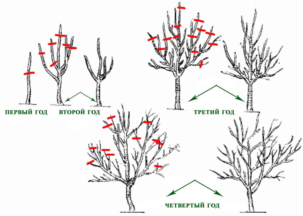 правильная обрезка деревьев весной