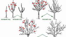 Весенняя обрезка деревьев — делаем правильно