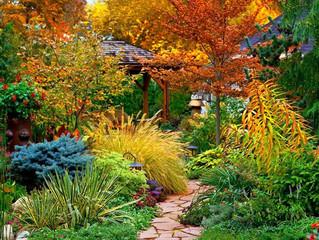 Ландшафтный дизайн дачного участка осенью