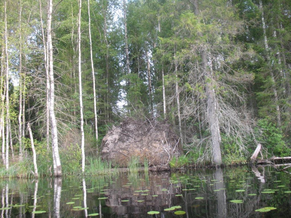Вепсский лес